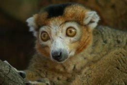 Diesen Lemur traf Doreen im National Park.