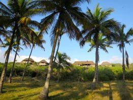 Travessia_BeachLodge_palm-lined