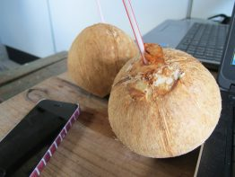 Coconuts at work