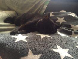 Auch Katze Mohrchen genießt die wohlige Wärme der Warmwasser-Deckenheizung.
