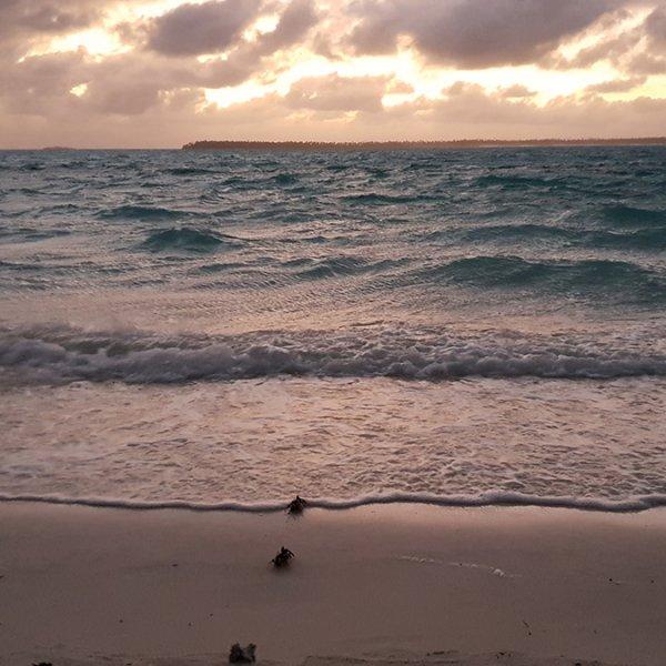 Tetiaroa Meeresschildkröte